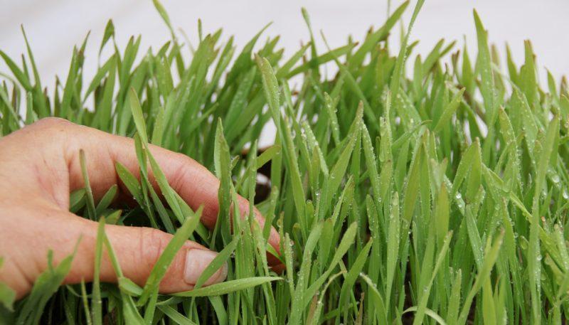 germination-589322_1920_raj-800x457.jpg